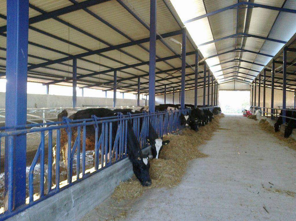 hayvan-barınakları-yapımı-Susurluk-17